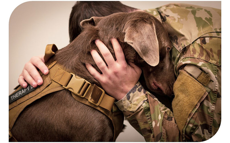 A man in military uniform hugging a brown dog with a therapy dog tag