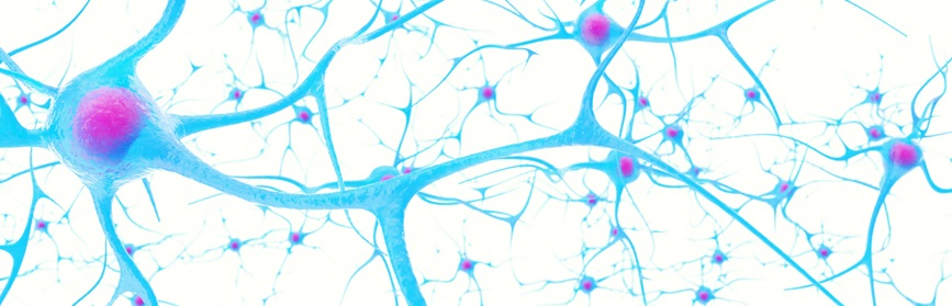 A depiction of neurons in the brain on white background.